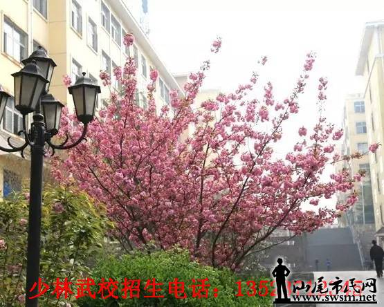 汕尾高中网-少林寺武术学校:过早恋爱让你变的河北市民衡水市图片