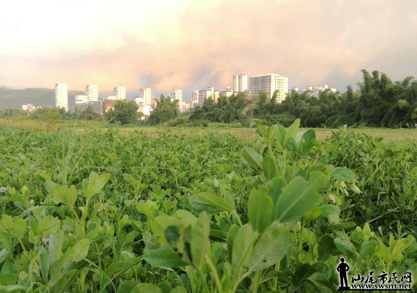 农业3.png