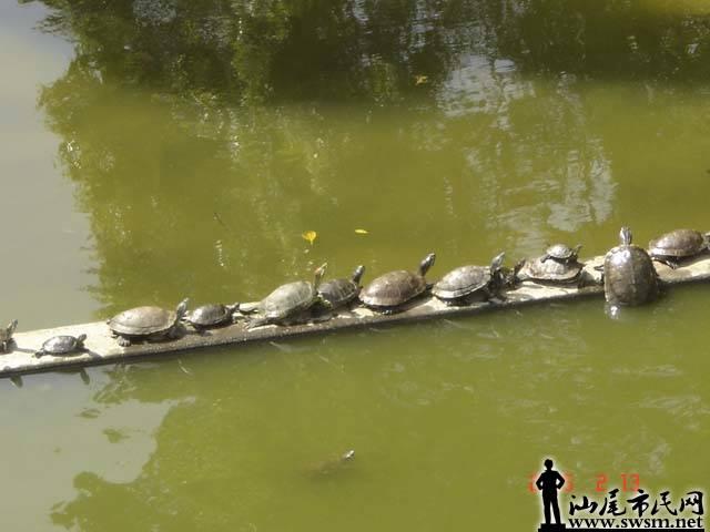 放生池排排座龟仔.jpg